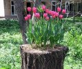 Make A Tree Stump Planter _8